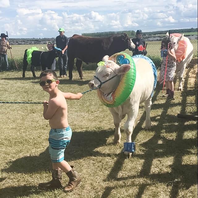 Charolais Show Steer